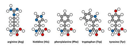 kinase: Arginine, histidine, phenylalanine, tryptophan and tyrosine amino acids. Stylized 2D renderings.