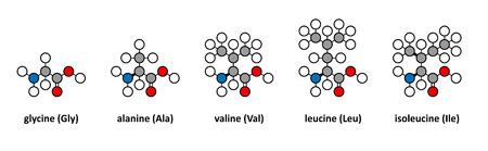 glycine: Glycine, alanine, valine, leucine and isoleucine amino acids. Stylized 2D renderings.
