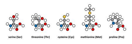 Serine, threonine, cysteine, methionine and proline amino acids. Stylized 2D renderings.