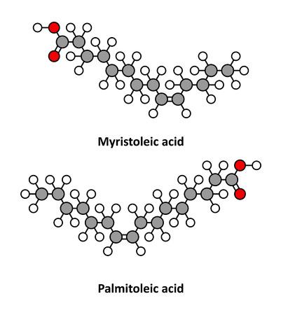 lipid a: Myristoleic acid (omega-5) and palmitoleic acid (omega-7) fatty acid molecules. Stylized 2D renderings.
