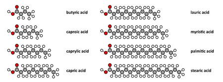 Los ácidos grasos saturados: butírico, caproico, caprílico, cáprico, láurico, mirístico, palmítico y ácido esteárico. Renderizados en 2D estilizados.