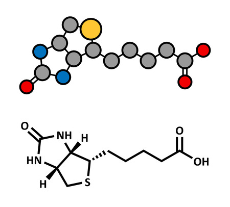 supplementation: Vitamin B7 (biotin) molecule. Stylized 2D rendering and conventional skeletal formula.