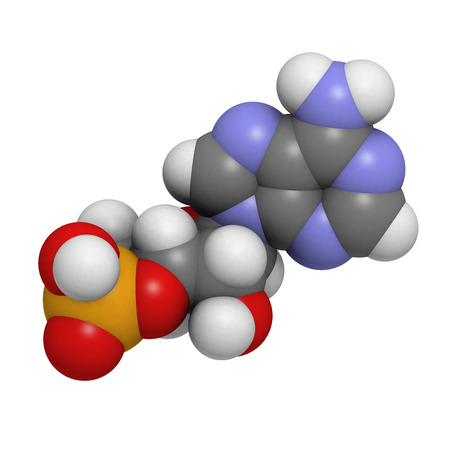 nucleoside: 3-5-cyclic adenosine monophosphate (cAMP) molecule. Important second messenger in many biological processes. Atoms are represented as spheres with conventional color coding: hydrogen (white), carbon (grey), oxygen (red), nitrogen (blue), orange (phospha