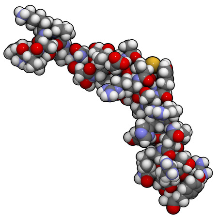 peptide: Neuropeptide Y (NPY) molecule. Neurotransmitter peptide that plays an important role in food intake. Atoms are represented as spheres with conventional color coding: hydrogen (white), carbon (grey), oxygen (red), nitrogen (blue), sulfur (yellow).