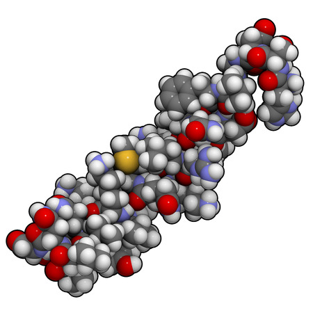 peptide: Vasoactive intestinal peptide (VIP) molecule.  Peptide that has a number of biological effects in the digestive system but also in the brain and the heart. Atoms are represented as spheres with conventional color coding: hydrogen (white), carbon (grey), o
