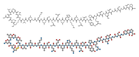 Salmon calcitonin peptide hormone drug, chemical structure. Used in treatment of postmenopausal osteoporosis and other diseases. Conventional skeletal formula and stylized representation, showing atoms (except hydrogen) as color coded circles. Illustration