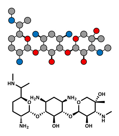 gram negative: Gentamicin antibiotic drug (aminoglycoside class), chemical structure. Conventional skeletal formula and stylized representation, showing atoms (except hydrogen) as color coded circles.
