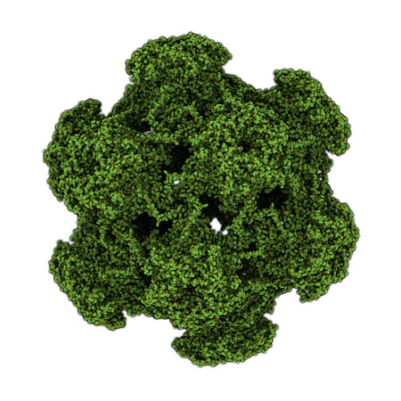 Human papillomavirus (HPV) 16. HPV causes skin and genital warts and a number of cancers, including cervical cancer. Atomic-level structure.  photo