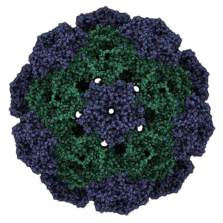 Human papillomavirus (HPV) 16. HPV causes skin and genital warts and a number of cancers, including cervical cancer. Atomic-level structure.