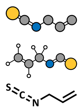 pungency: Allyl isothiocyanate mustard pungency molecule. Responsible for pungent taste of mustard, wasabi and radish. Stylized 2D rendering and conventional skeletal formula.