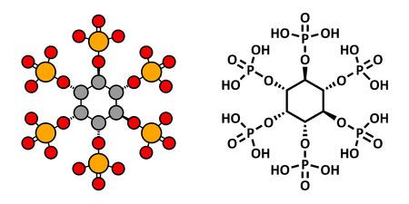 L'acido fitico (hexakisphosphate, IP6, fitati) molecola. Presente in semi e cereali di molte piante, in qualità di forma di fosforo stoccaggio. Il rendering 2D stilizzato e formula scheletrico convenzionale. Archivio Fotografico - 29729782
