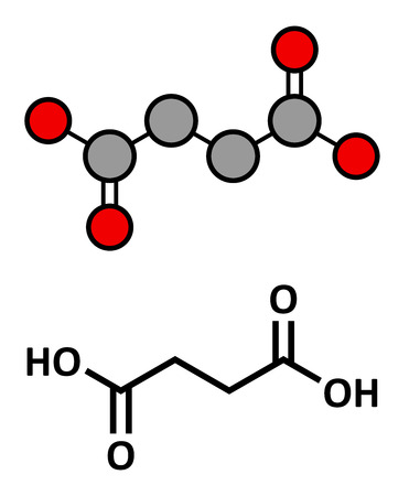 salts: Succinic acid (butanedioic acid, spirit of amber) molecule. Intermediate of citric acid cycle. Salts and esters known as succinates. Stylized 2D rendering and conventional skeletal formula.