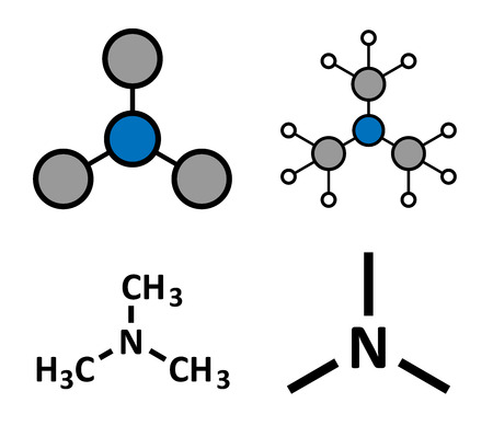 Trimethylamine volatile tertiary amine molecule. Important component of the smell of (rotting) fish. Stylized 2D renderings and conventional skeletal formulae. Illustration
