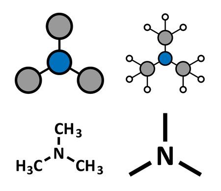 amoniaco: Trimetilamina volátil molécula de amina terciaria. Componente importante del olor (descomposición) de pescado. Renderizados en 2D estilizadas y fórmulas esqueléticas convencionales. Vectores