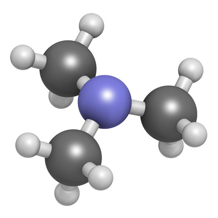 tertiary: Trimethylamine volatile tertiary amine molecule. Important component of the smell of (rotting) fish. Atoms are represented as spheres with conventional color coding: hydrogen (white), carbon (grey), nitrogen (blue).