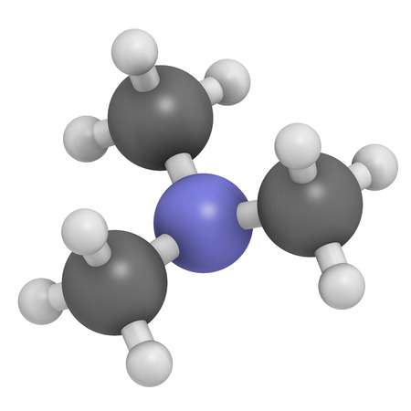 amine: Trimethylamine volatile tertiary amine molecule. Important component of the smell of (rotting) fish. Atoms are represented as spheres with conventional color coding: hydrogen (white), carbon (grey), nitrogen (blue).