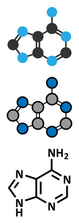nucleoside: Adenine (A) purine nucleobase molecule. Base present in DNA and RNA. Stylized 2D renderings and conventional skeletal formula.