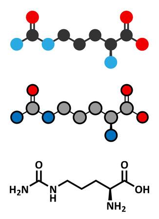 Citrulline amino acid molecule.  Illustration