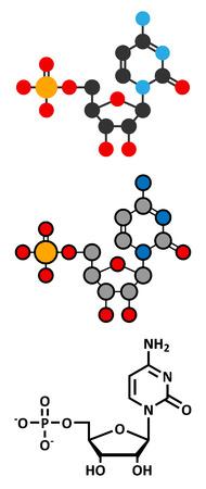 nucleoside: Cytidine monophosphate (CMP, cytidylate) RNA building block molecule.