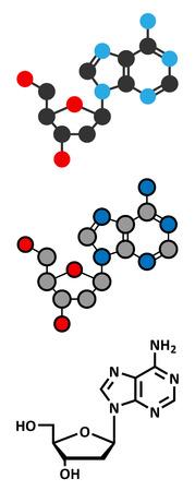 nucleoside: Deoxyadenosine (dA) nucleoside molecule.