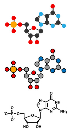 guanosine: Guanosine monophosphate (GMP, guanylic acid) RNA building block molecule.