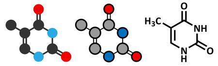 thymine: Thymine (T) nucleobase molecule.  Illustration
