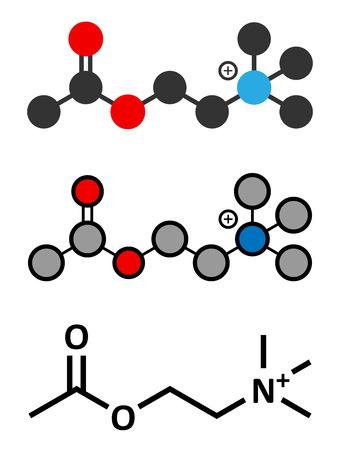 Acetylchloline (ACh) neurotransmitter molecule. Vector