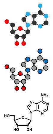 Adenosine (Ado) purine nucleoside molecule.  Vector