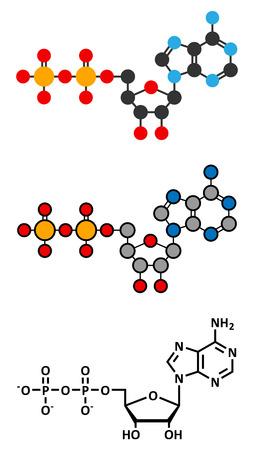 Adenosine diphosphate (ADP) molecule.  Vector