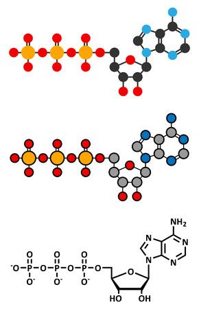 atp: Adenosine triphosphate (ATP) molecule.