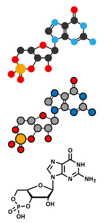 Cyclic guanosine monophosphate (cGMP) molecule. Stylized 2D renderings and conventional skeletal formula.