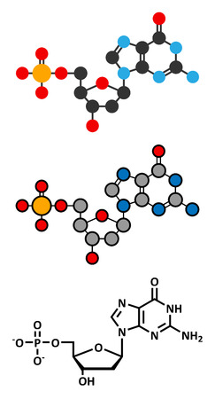 monophosphate: Deoxyguanosine monophosphate (dGMP) nucleotide molecule. DNA building block. Stylized 2D renderings and conventional skeletal formula.