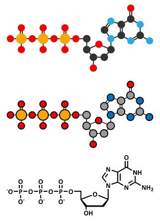 triphosphate: Deoxyguanosine triphosphate (dGTP) nucleotide molecule. DNA building block. Stylized 2D renderings and conventional skeletal formula. Illustration
