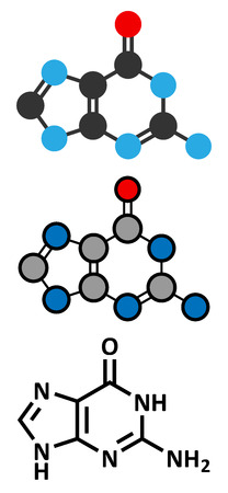 guanosine: Guanine (G) purine nucleobase molecule. Base present in DNA and RNA. Stylized 2D renderings and conventional skeletal formula.