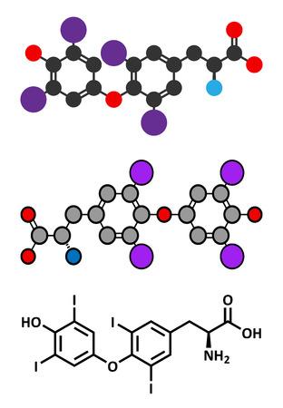 hypothyroidism: Thyroxine (T4, levothyroxine) thyroid hormone molecule. Prohormone of thyronine (T3). Used as drug to treat hypothyroidism. Stylized 2D renderings and conventional skeletal formula.