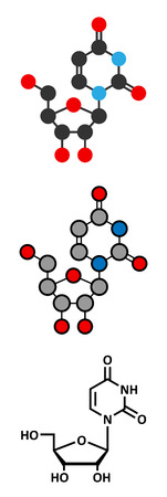 nucleoside: Uridine nucleoside molecule. Building block of RNA. Stylized 2D renderings and conventional skeletal formula.