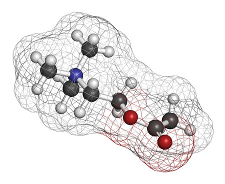 nicotinic: Acetylchloline (ACh) neurotransmitter molecule. Atoms are represented as spheres with conventional color coding: hydrogen (white), carbon (grey), oxygen (red), nitrogen (blue).