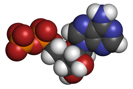 energy use: Adenosine diphosphate (ADP) molecule. Plays essential role in energy use and storage in the cell. Atoms are represented as spheres with conventional color coding: hydrogen (white), carbon (grey), oxygen (red), nitrogen (blue), phosphorus (orange). Stock Photo