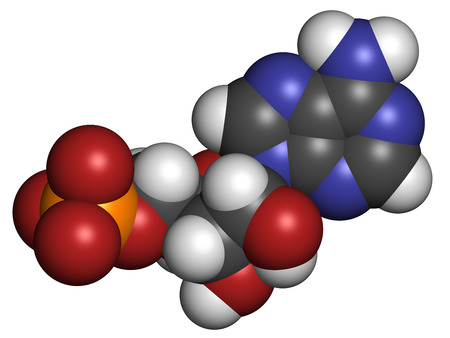 nucleotide: Adenosine monophosphate (AMP, adenylic acid) molecule. Nucleotide monomer of RNA. Composed of phosphate, ribose and adenine moieties. Atoms are represented as spheres with conventional color coding: hydrogen (white), carbon (grey), oxygen (red), nitrogen  Stock Photo