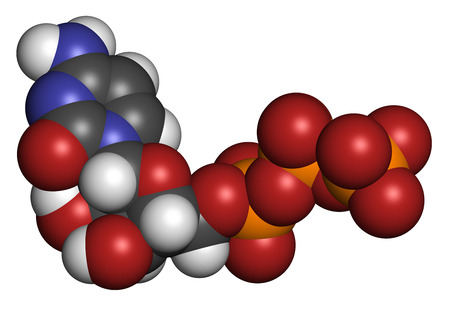 Cytidine triphosphate (CTP) RNA building block molecule. Also functions as cofactor to some enzymes. Atoms are represented as spheres with conventional color coding: hydrogen (white), carbon (grey), nitrogen (blue), oxygen (red), phosphate (orange).