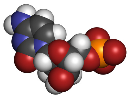 monophosphate: Deoxycytidine monophosphate (dCMP) nucleotide molecule. DNA building block. Atoms are represented as spheres with conventional color coding: hydrogen (white), carbon (grey), nitrogen (blue), oxygen (red), phosphorus (orange).