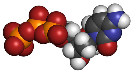 triphosphate: Deoxycytidine triphosphate (dCTP) nucleotide molecule. DNA building block. Atoms are represented as spheres with conventional color coding: hydrogen (white), carbon (grey), nitrogen (blue), oxygen (red), phosphorus (orange).