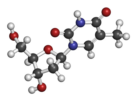 nucleoside: Thymidine (deoxythymidine) nucleoside molecule. DNA building block. Atoms are represented as spheres with conventional color coding: hydrogen (white), carbon (grey), nitrogen (blue), oxygen (red).