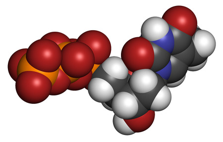 triphosphate: Thymidine triphosphate (TTP) nucleotide molecule. DNA building block. Atoms are represented as spheres with conventional color coding: hydrogen (white), carbon (grey), nitrogen (blue), oxygen (red), phosphorus (orange).