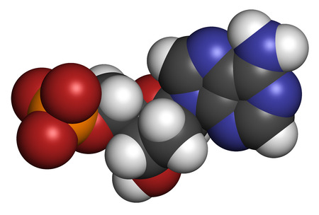 nucleotide: Deoxyadenosine monophosphate (dAMP) nucleotide molecule. DNA building block. Atoms are represented as spheres with conventional color coding: hydrogen (white), carbon (grey), nitrogen (blue), oxygen (red), phosphorus (orange). Stock Photo