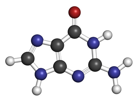 guanosine: Guanine (G) purine nucleobase molecule. Base present in DNA and RNA. Atoms are represented as spheres with conventional color coding: hydrogen (white), carbon (grey), oxygen (red), nitrogen (blue).