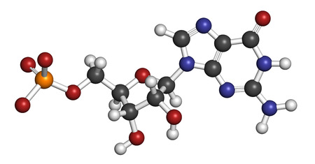 guanosine: Guanosine monophosphate (GMP, guanylic acid) RNA building block molecule. Guanylate salts are used as umami flavor enhancers in food. Atoms are represented as spheres with conventional color coding: hydrogen (white), carbon (grey), nitrogen (blue), oxygen