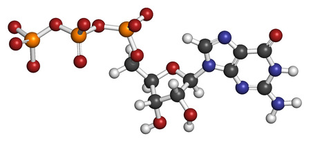 guanosine: Guanosine triphosphate (GTP) RNA building block molecule. Also used as energy transport molecule and in signal transduction. Atoms are represented as spheres with conventional color coding: hydrogen (white), carbon (grey), nitrogen (blue), oxygen (red), p