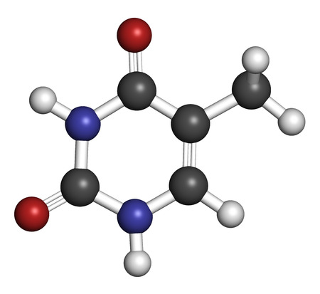 dimer: Thymine (T) nucleobase molecule. present in DNA. Atoms are represented as spheres with conventional color coding: hydrogen (white), carbon (grey), nitrogen (blue), oxygen (red). Stock Photo
