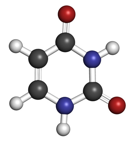 uracil: Uracil (U) nucleobase molecule. Present in ribonucleic acid (RNA). Atoms are represented as spheres with conventional color coding: hydrogen (white), carbon (grey), oxygen (red), nitrogen (blue). Stock Photo
